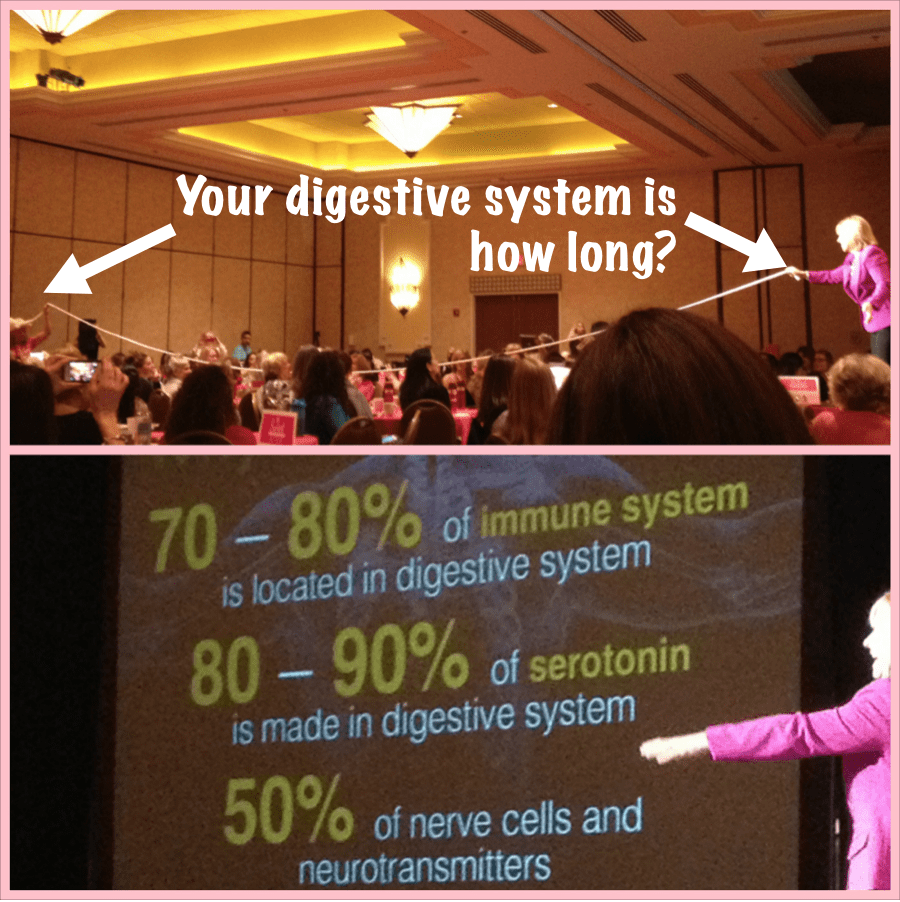 Digestive System Is How Long?
